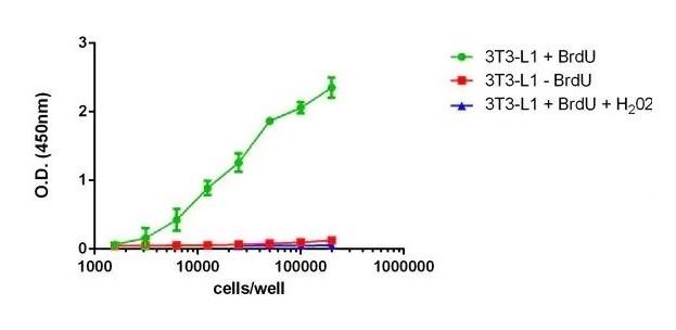 BrdU Cell Proliferation ELISA Kit (colorimetric)