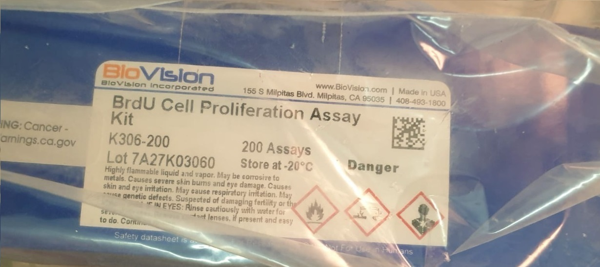 BrdU Cell Proliferation
