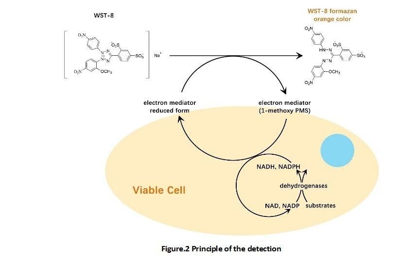 Cell Counting Kit-8 Apexbio