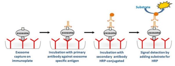 Exosome Capture and Quantification Assay Kit