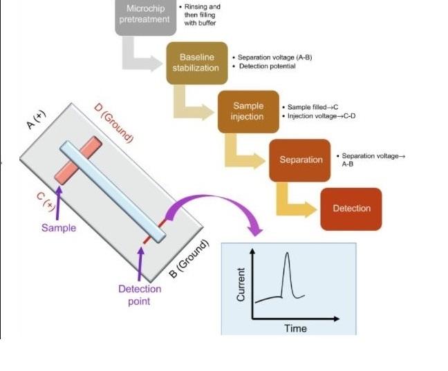Recombinant Proteinase K