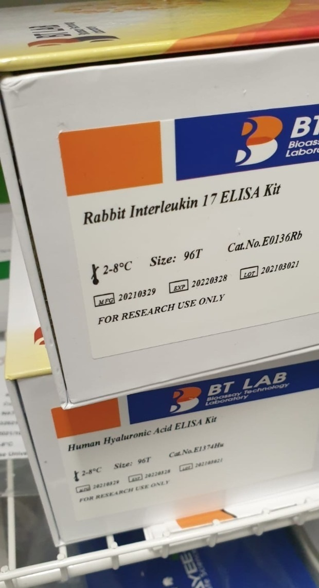 rabbit interlukin