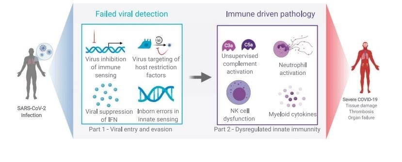 sars cov 2 infection